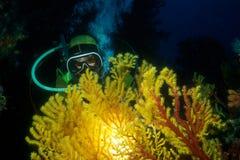 Plongeur Photographie stock libre de droits