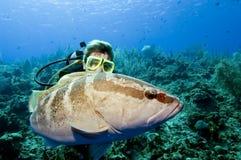 Plongeur agissant l'un sur l'autre avec le mérou Photographie stock