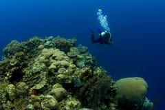 Plongeur au-dessus de pinacle de récif coralien Photo stock
