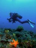 Plongeur au-dessus des étoiles de mer Image libre de droits