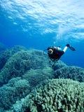 Plongeur au-dessus du récif coralien Images libres de droits