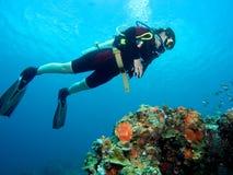 Plongeur au-dessus du récif coralien Photographie stock
