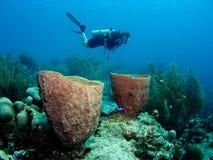 Plongeur au-dessus du récif coralien Photos stock