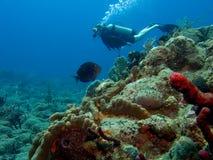 Plongeur au-dessus du récif coralien Photo libre de droits