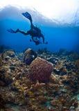 Plongeur autonome avec un appareil-photo au St Lucia Image stock