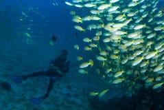 Plongeur autonome avec des poissons image libre de droits