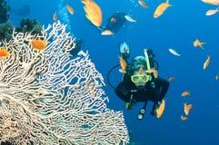 Plongeur autonome avec les poissons et le corail Photo libre de droits