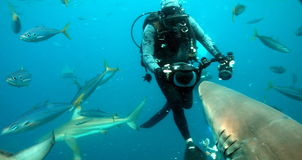 Plongeur autonome capturant le requin Photo stock