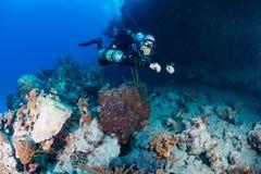 Plongeur autonome dans le sidemount sur un récif Image stock