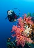 Plongeur autonome de Feamle et récif coralien coloré Image stock