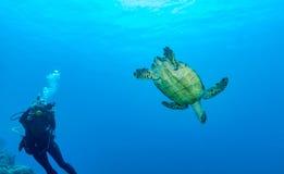 Plongeur autonome de tortue et avec l'appareil-photo Photos libres de droits