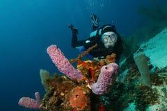 Plongeur autonome et éponges - Roatan Photos libres de droits