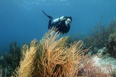 Plongeur autonome et forêt de Gorgonians - Bonaire Images libres de droits