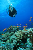 Plongeur autonome et récif coralien photos stock