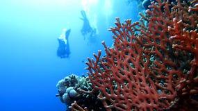 Plongeur autonome Life Photographie stock libre de droits