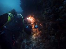 Plongeur autonome prenant des photos d'espèce marine photographie stock