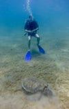 Plongeur autonome observant une tortue de mer verte manger l'herbe de mer Images stock