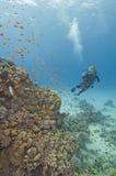 Plongeur autonome sur un récif coralien Photo libre de droits