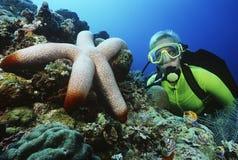 Plongeur autonome Watching Large Starfish photo libre de droits