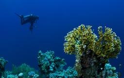 Plongeur avec l'appareil-photo Images libres de droits