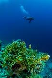 Plongeur avec l'appareil-photo sous-marin Images stock