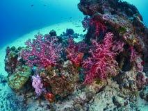 Plongeur avec le récif caral images stock