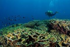 Plongeur avec le récif coralien   Photographie stock
