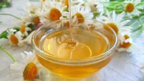 Plongeur délicieux de miel de fleur fraîche de marguerite sur le mouvement lent de fond concret gris banque de vidéos