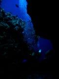 Plongeur de gorge Photographie stock