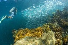 Plongeur entrant à l'intérieur d'une école d'eau du fond de poissons photos stock