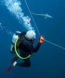 Plongeur Escort - Remora Photo libre de droits
