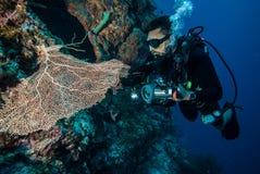 Plongeur et fan de mer Gorgonia dans Derawan, photo sous-marine de Kalimantan, Indonésie images stock