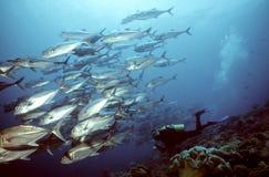 Plongeur et plots Photo libre de droits
