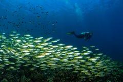Plongeur et poissons Photo libre de droits