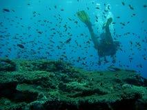 Plongeur et poissons sur un récif Photographie stock libre de droits
