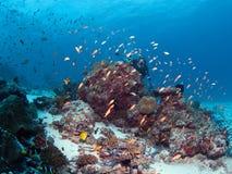 Plongeur et récif Photo stock