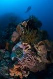 Plongeur et récif divers Photographie stock