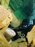 Plongeur et requin d'infirmière courageux Photo libre de droits