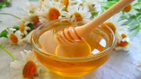 Plongeur frais de fleur de marguerite de miel sur le mouvement lent de fond concret gris banque de vidéos