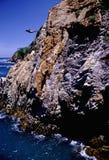 Plongeur gracieux Photos libres de droits