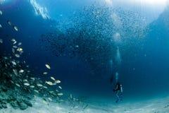 Plongeur Inside de Beaytiful Latina une école des poissons Photographie stock