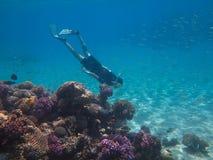 Plongeur libre dans le récif Photos stock