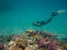 Plongeur libre dans le récif Photographie stock