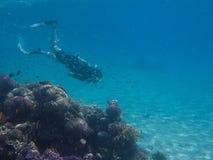 Plongeur libre dans le récif Photographie stock libre de droits