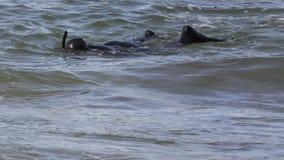 Plongeur solitaire Photos libres de droits