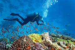 Plongeur sur le récif coralien Image stock