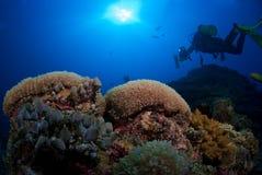 Plongeur sur le récif coralien images stock