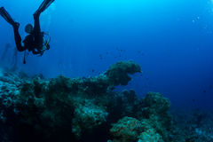 Plongeur sur le reaf photo stock