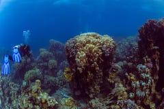 Plongeur sur le reaf image libre de droits