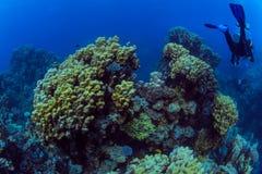 Plongeur sur le reaf images stock